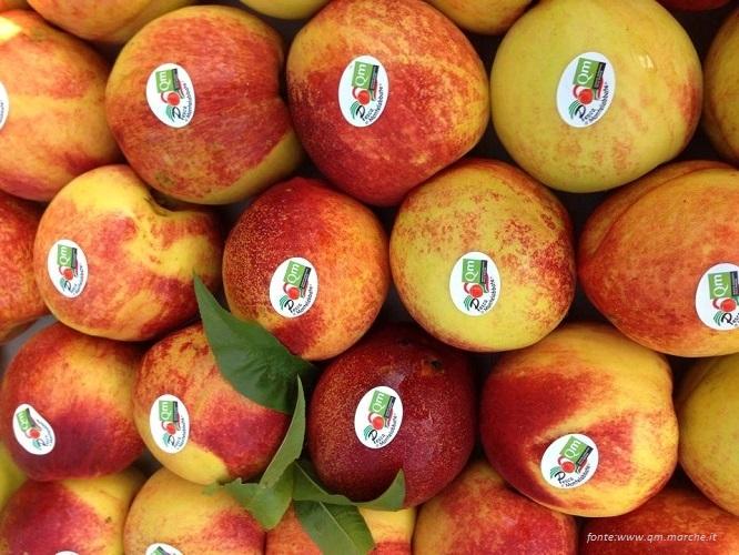 Frutta estiva - pesche marchio qualità delle Marche.